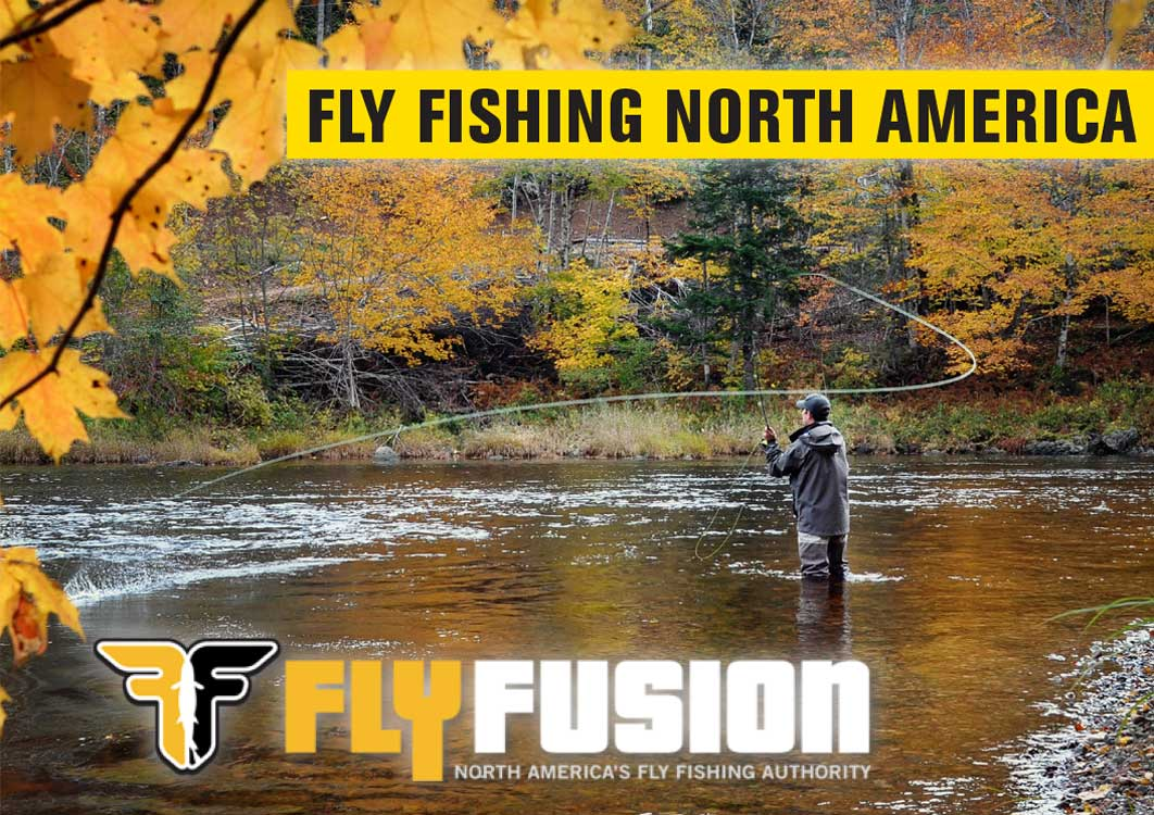 Fly Fusion TV